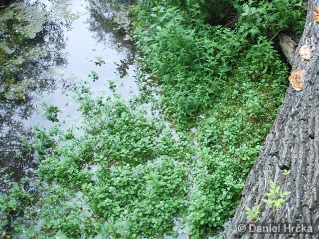 Povodí potoka Jordán