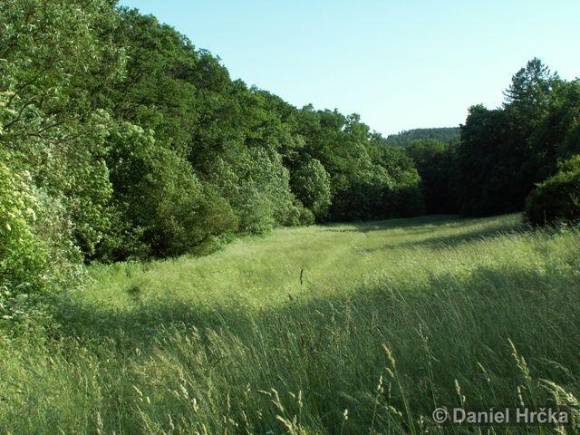 Přírodní památka Slavičí údolí