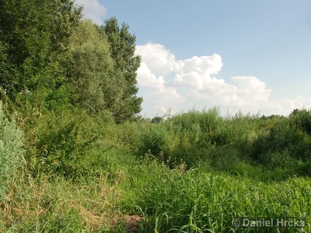 Vltavské peřeje