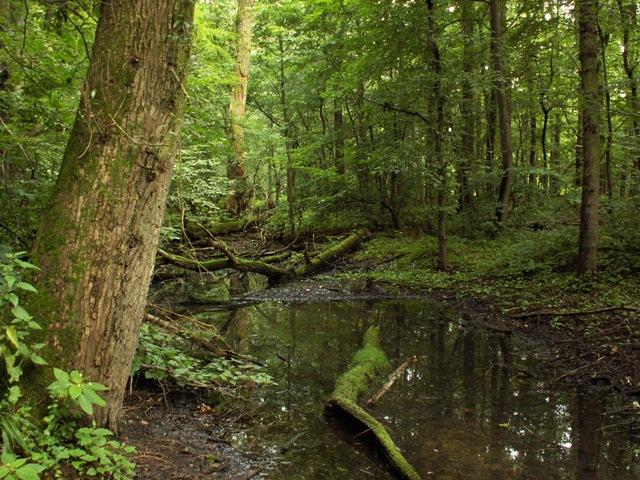 Přírodní rezervace Černínovsko