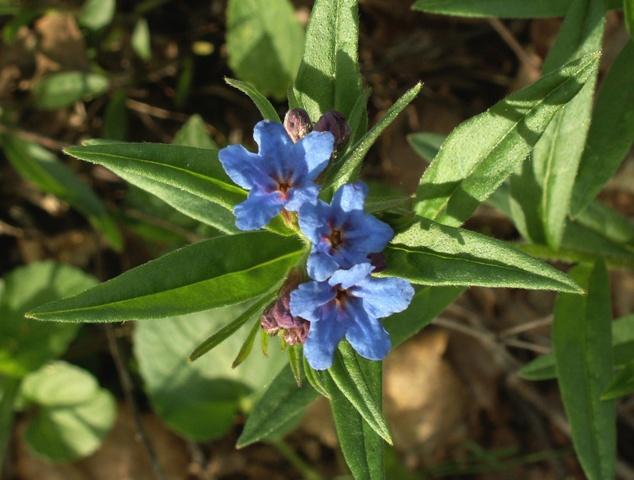 přírodní rezervace Chuchelský háj