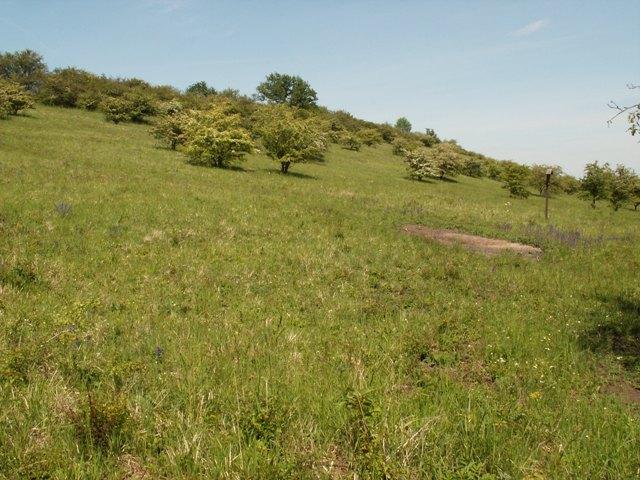 Přírodní rezervace Dřínovská stráň