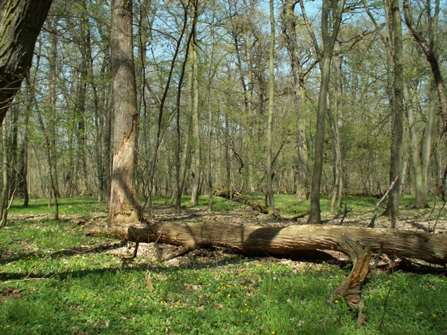 Přírodní rezervace Lipovka