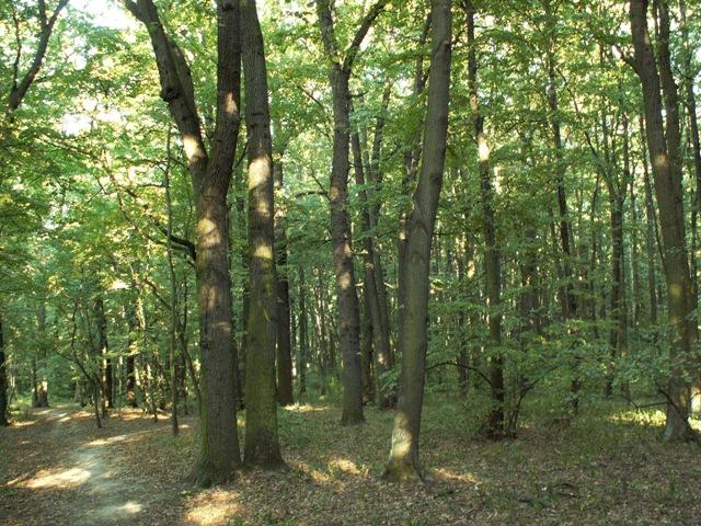 Milíčovský les
