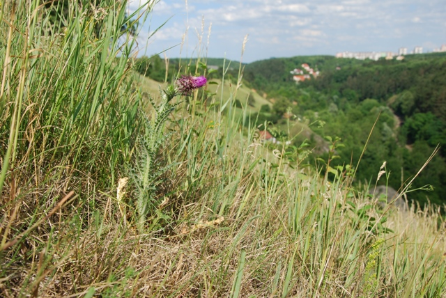 Přírodní památka Opatřilka-Červený lom