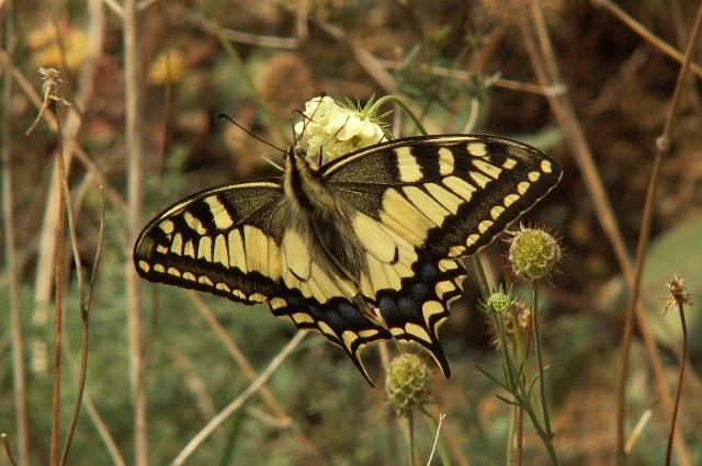 Přírodní rezervace Podhoří
