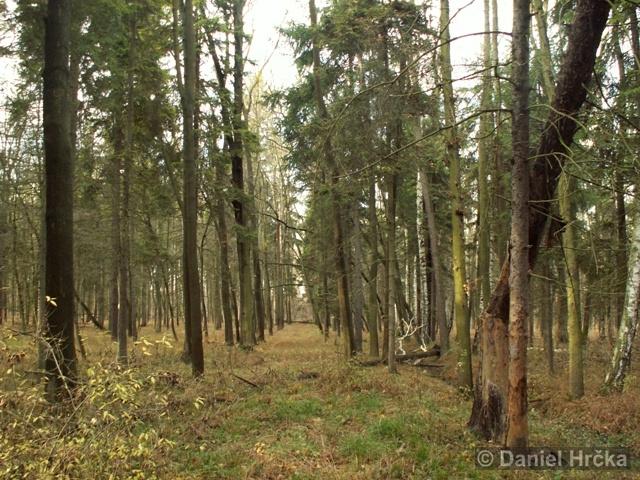 Přírodní památka Prutník
