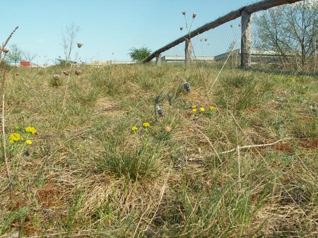 Přírodní památka V hrobech