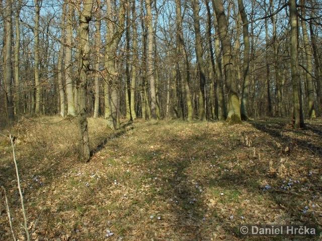 přírodní rezervace Homolka