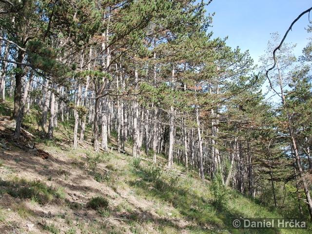 přírodní rezervace Klapice