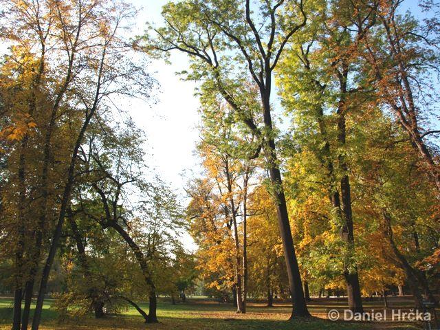 KRÁLOVSKÁ OBORA – přírodní památka
