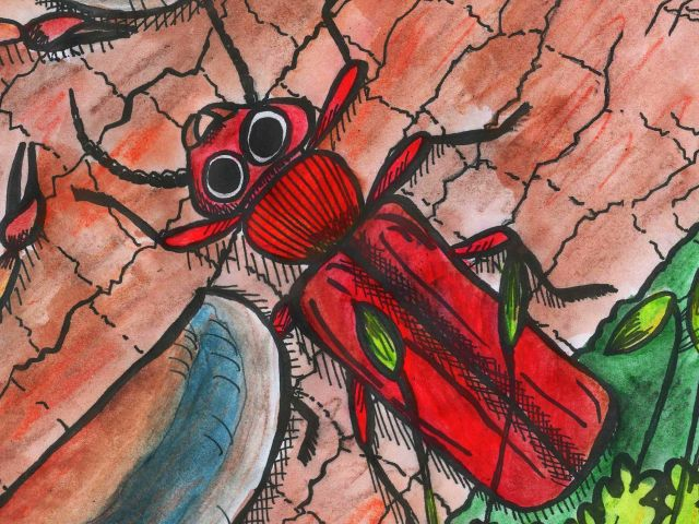 CUCUJUS CINNABERINUS (Scopoli, 1763) – lesák rumělkový