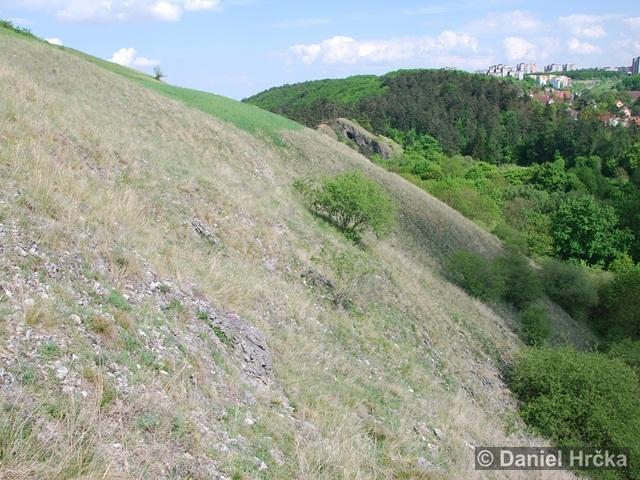 lišejníkovec malý Prokopské údolí
