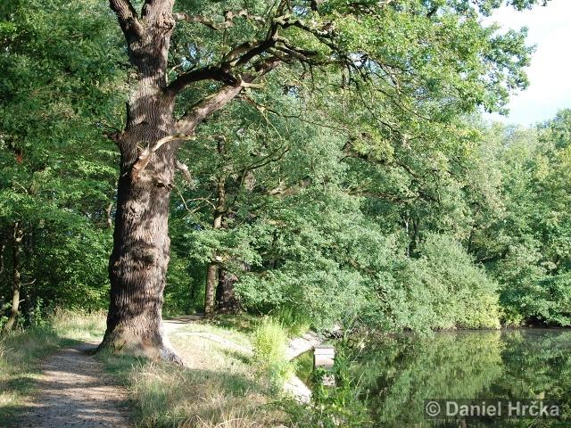 MILÍČOVSKÝ LES – evropsky významná lokalita
