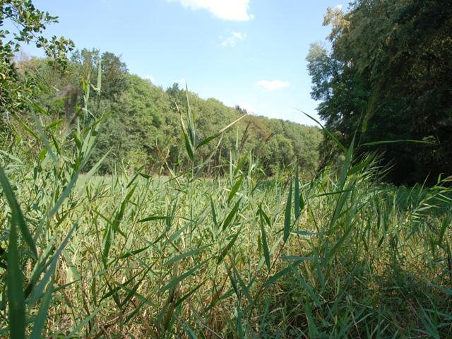 přírodní rezervace Mýto