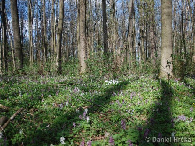 OBORA V UHŘÍNĚVSI – přírodní památka