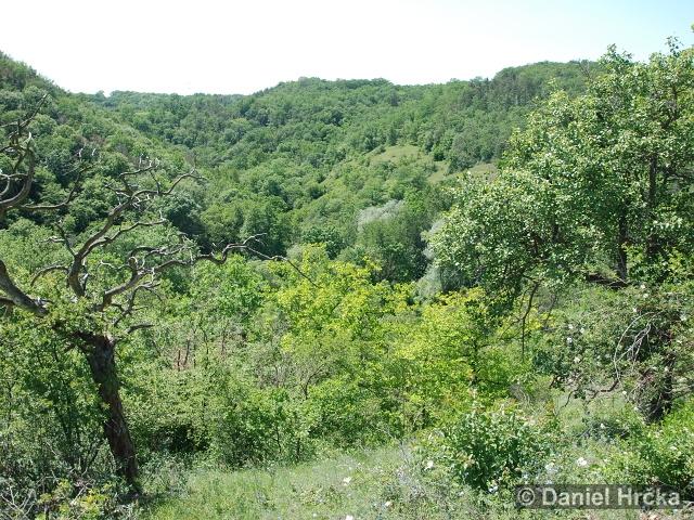 RADOTÍNSKÉ ÚDOLÍ – přírodní rezervace